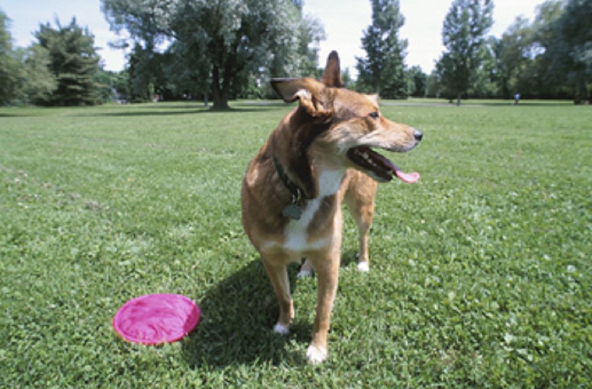 Washington Park Dog Area Gets Public Hearing
