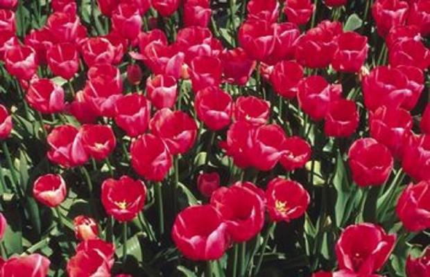 Springfield Civic Garden Club Flower Show